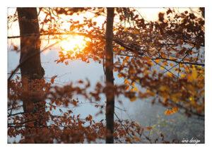 aerie_PK_Herbstsonne
