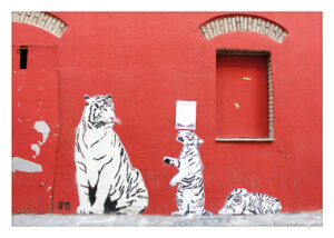 aerie_PK_Tigerwand